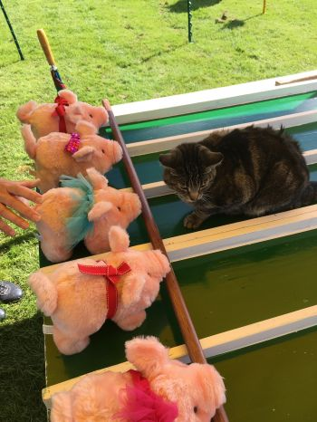 Cat on the Pig Racing Game